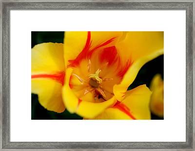 The Beauty Inside Framed Print by Jennifer Ancker