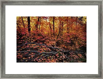 The Beauty Of Autumn  Framed Print by Saija  Lehtonen