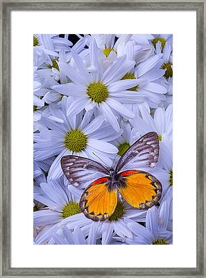 The Beauty Of Butterflies Framed Print by Garry Gay