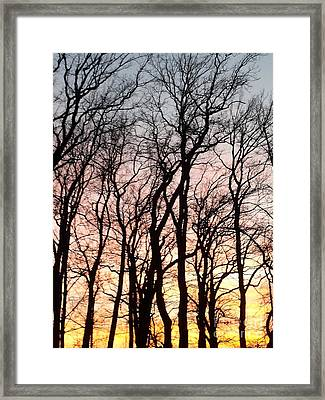 The Beauty Of Nature Framed Print by Adela Kitty