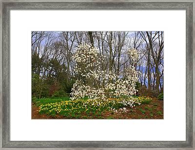 The Beauty Of Spring Framed Print by Dora Sofia Caputo Photographic Art and Design