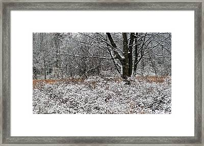 The Beauty Of Winter Framed Print by Aimee L Maher Photography and Art Visit ALMGallerydotcom