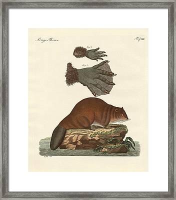 The Beaver Framed Print by Splendid Art Prints