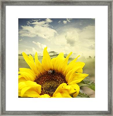 The Bee Framed Print by Les Cunliffe