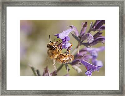 The Bee's Knees Framed Print by Caitlyn  Grasso