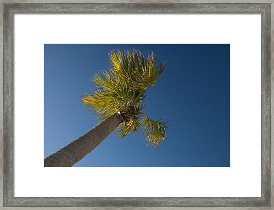 The Best View Framed Print by Rich Leighton