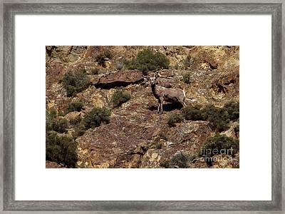 The Bighorn Uwe Framed Print by Robert Bales