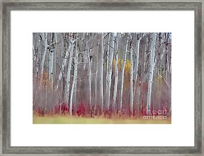 The Birches - Single Framed Print by Andrea Kollo