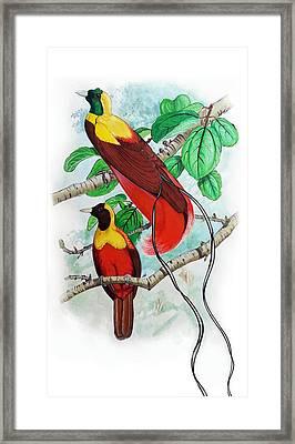 The Birds Of Paradise Framed Print by Mayur Sharma