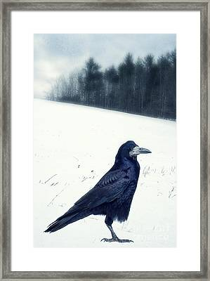 The Black Crow Knows Framed Print by Edward Fielding