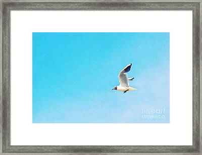 The Black Headed Gull Framed Print by Angela Doelling AD DESIGN Photo and PhotoArt