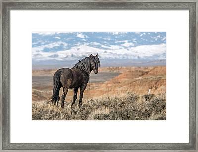 The Black Stallion Framed Print by Sandy Sisti