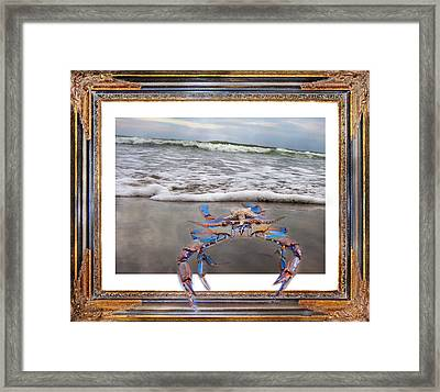 The Blue Crab Framed Print by Betsy C Knapp