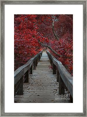 The Boardwalk Framed Print by Douglas Barnard
