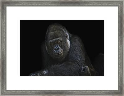 The Boss Framed Print by Joachim G Pinkawa
