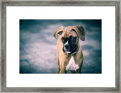 The Boxer Framed Print by Karen Zucal Varnas
