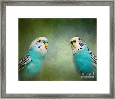 The Budgie Collection - Budgie Pair Framed Print by Jai Johnson