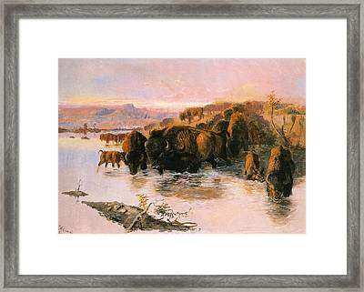 The Buffalo Herd Framed Print by Charles Russell