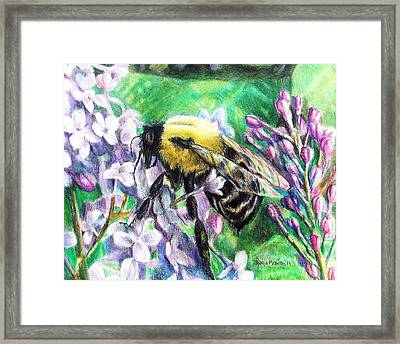 The Busy Bee And The Lilac Tree Framed Print by Shana Rowe Jackson