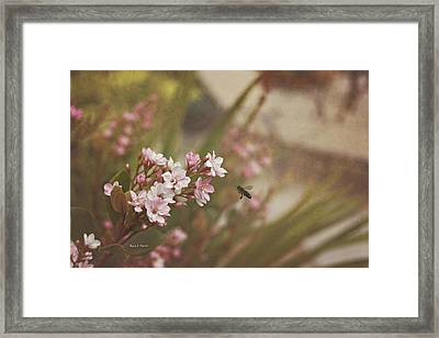 The Busy Bee Framed Print by Angela A Stanton