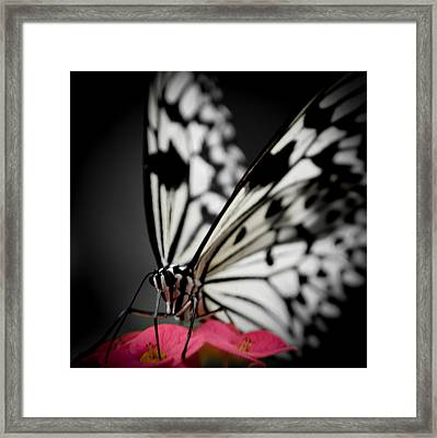 The Butterfly Emerges Framed Print by Jen Baptist