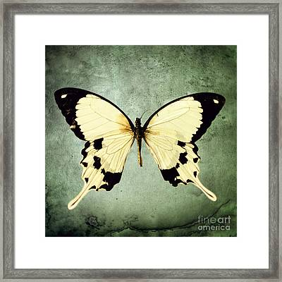 The Butterfly Project 1 Framed Print by Diane Miller