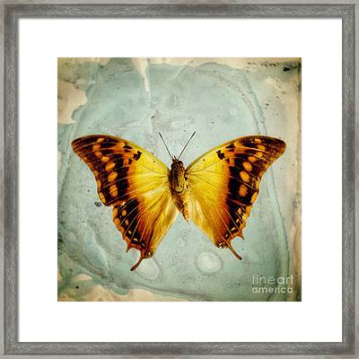 The Butterfly Project 6 Framed Print by Diane Miller