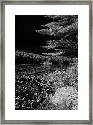 The Calm Of Cary Lake Framed Print by David Patterson