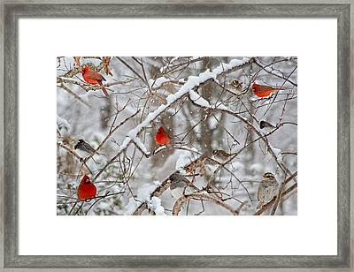 The Cardinal Rules Framed Print by Betsy C Knapp