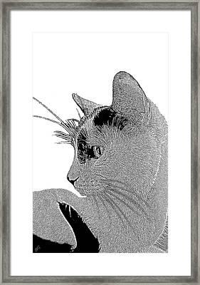 The Cat Framed Print by Ben and Raisa Gertsberg
