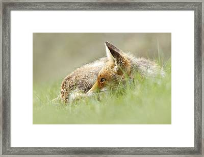 The Catcher In The Grass II   Red Fox Framed Print by Roeselien Raimond