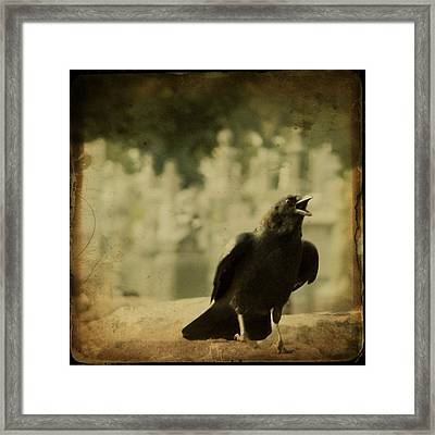 The Caw Framed Print by Gothicolors Donna Snyder