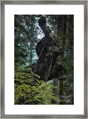 The Centaur Framed Print by Belinda Greb