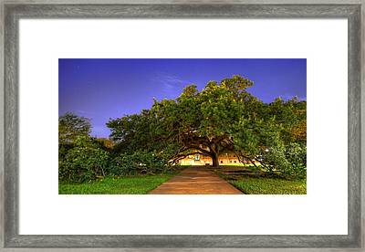 The Century Tree Framed Print by David Morefield