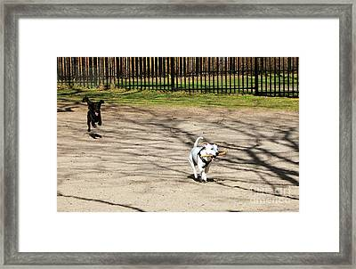 The Chase Framed Print by Charline Xia