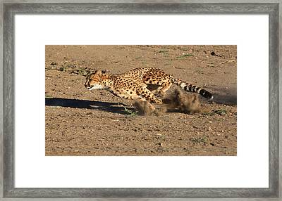 The Chase Framed Print by Donna Kennedy