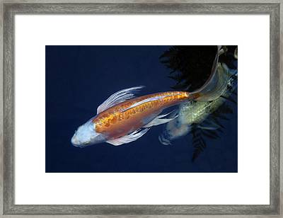 The Chase Framed Print by Rebecca Cozart