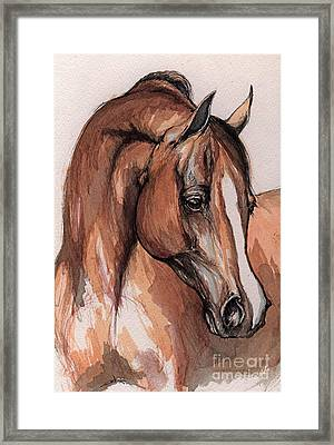 The Chestnut Arabian Horse 3 Framed Print by Angel  Tarantella