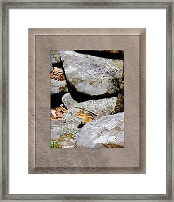The Chipmunk Framed Print by Patricia Keller
