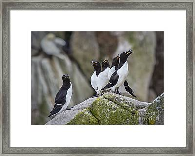 The Chorus Line Framed Print by Evelina Kremsdorf