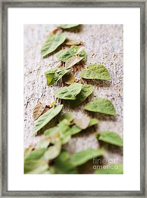 The Climb Framed Print by Pamela Gail Torres