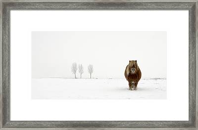 The Cold Pony Framed Print by Gert Van Den