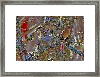 The Cold Shoulder Framed Print by Gary Holmes