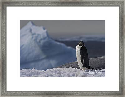 The Coldest Place On Earth... Framed Print by Nina Stavlund