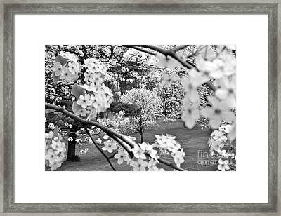 The Color Of Spring Framed Print by Jay Nodianos