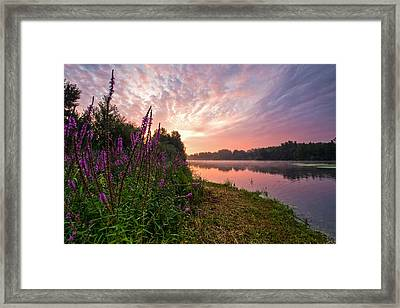 The Color Purple Framed Print by Davorin Mance