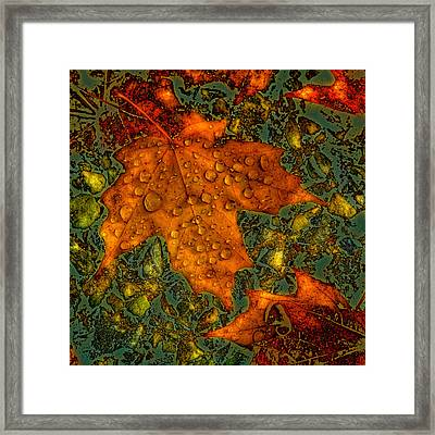 The Colors Of Autumn Framed Print by David Patterson