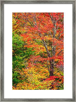 The Colors Of Autumn Framed Print by Jeff Sinon