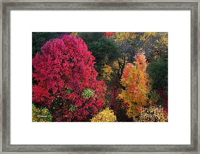The Colors Of Fall Framed Print by E B Schmidt