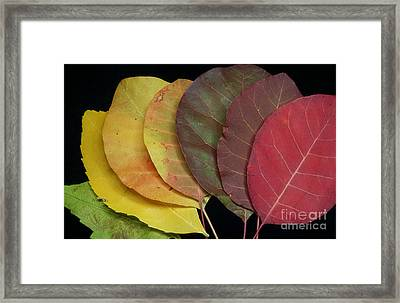 The Colours Of Nature Framed Print by Stela Taneva